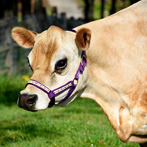 Perri' s mini nylon Cow Halter, Purple Flower, Size 1
