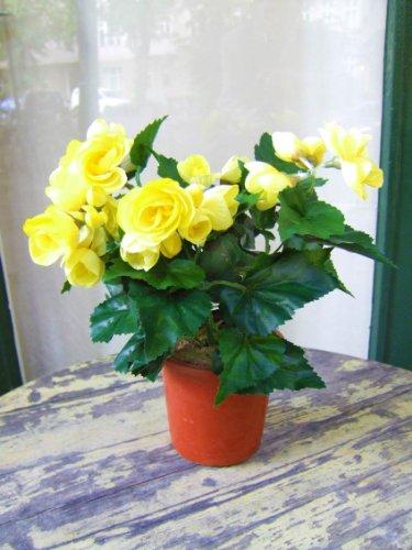 Licht & Grün Künstliche Begonie, gelb, 2 Stück, sehr dekorativ