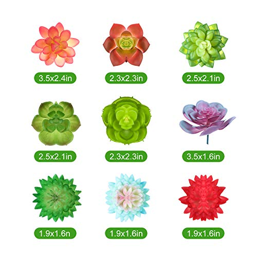 WILLBOND WILLBOND-Plants, Seeds & Bulbs-001