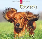 Dackel: Original Stürtz-Kalender 2020 - Mittelformat-Kalender 33 x 31 cm