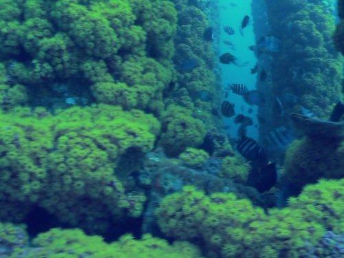 Ocean Mysteries - Birds Of A Feather