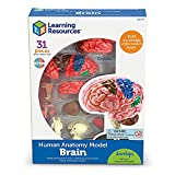 Learning Resources Brain Model