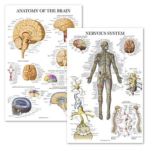 """2 Pack - Nervous System & Brain Anatomy Posters - Set of 2 Anatomical Charts - Laminated 18"""" x 27"""""""