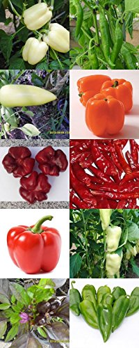 Historical Hungarian pepper seeds, 10 different verieties separately packed, 100 graines