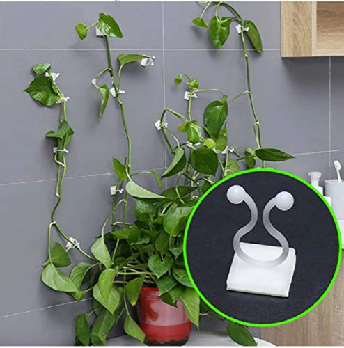 WSWWY Vine Support Fixing Clips Vine Plant Climbing Wall Fixer Vine Wall Clips Plant and Flower Clips for Supporting Stems (50 Pcs, M)