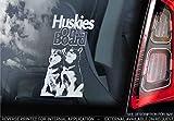 Husky V004 - Adhesivo para coche, diseño de perro siberiano, Blanco/Transparente - Impresión exterior externa, 200x100mm
