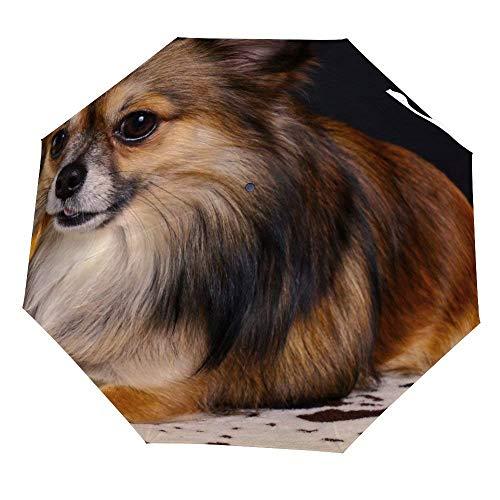 Klappschirm Chihuahua Kleiner lustiger Hundeschirm Offen Schließen Winddichter Regenschirm Leichte kompakte Außenschirme Sonne & Regen