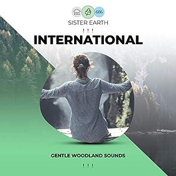 ! ! ! Gentle International Woodland Sounds ! ! !