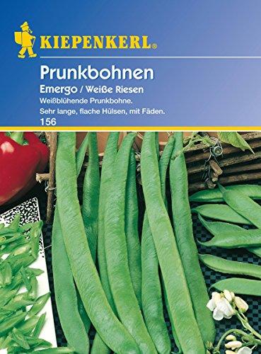 Saatgut Bohnen Emergo / Weiße Riesen