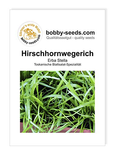 Bobby-Seeds Salatsamen Hirschhornwegerich - Erba Stella Portion