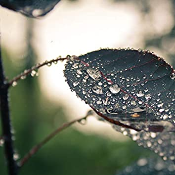 Simply Serene Loopable Rain Soundscapes
