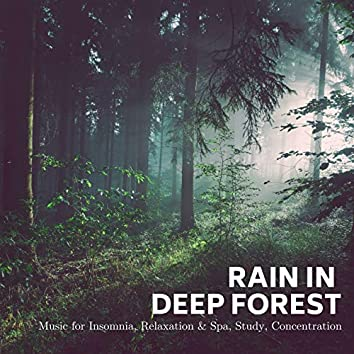 Rain In Deep Forest: Music For Insomnia, Relaxation & Spa, Study, Concentration