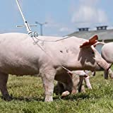 AMONIDA 【𝐎𝐬𝐭𝐞𝐫𝐧】 Starker Schweinehalter, 25.6In mehrsträngigen Stahl-Landwirtschaftsgeräten, Kuhschaf-Viehschlinge für Schweinehaus-Landwirtschaftsgeräte
