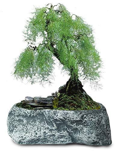 Dahlia Stone Like Handmade Concrete Succulent Planter/ Plant Pot/ Flower Pot/ Bonsai Pot, #2