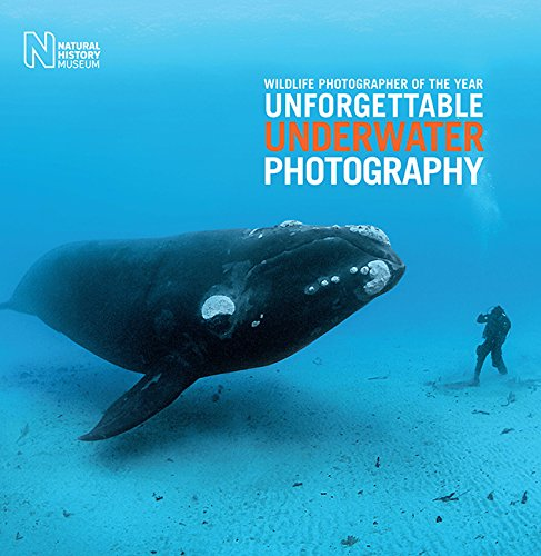 Wildlife Photographer of the Year: Unforgettable Underwater Photography