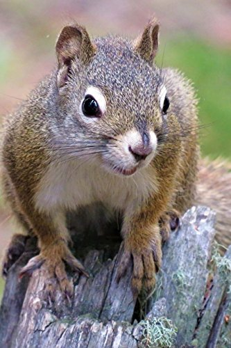 Squirrel Notebook: 150 lined pages, softcover, 6 x 9