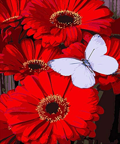 KZIK DIY Oil Painting Paint by Number Kit Canvas Painting Hand Colouring White Christmas Decor Decorations Gifts - Red Flower White Butterfly 16x20 inch