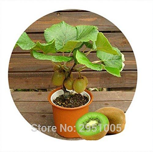 100pcs/lot Mini graines de fruits bonsaïs, délicieux petits arbres fruitiers semences