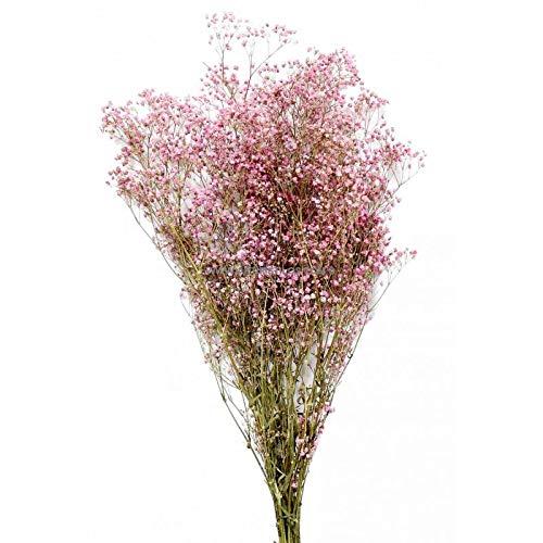 Artipistilos Paniculata Preservada Premium - Rosa - Flores Preservadas