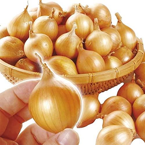 国華園 玉ねぎ 北海道産 ペコロス 約2�s (1kg×2箱) 食品
