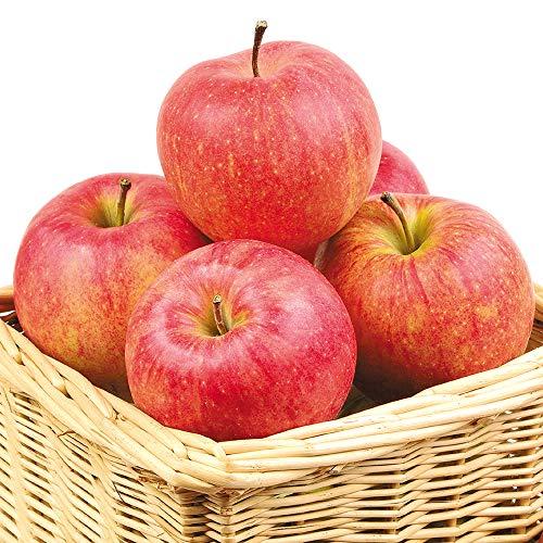 国華園 食品 りんご 山形産 ふじ・サンふじ 10kg 1箱