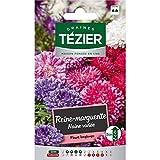 bolsa de semillas Varias margaritas enanas reina - Tezier