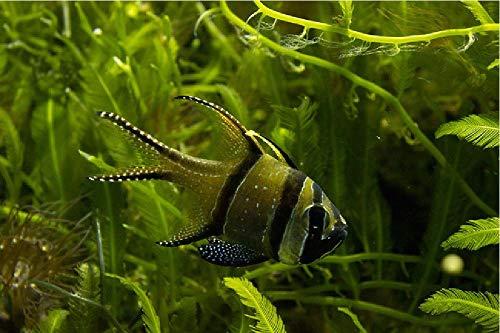 Vis in het aquarium aquarium schilderij volgens cijfers DIY Unique