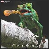 Chameleons 2021 Wall Calendar: Official Chameleons Calendar 2021, 18 Months