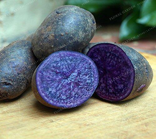 Bloom Green Co. Hohe Qualität 200 PCS/Pack-Rare China High-Ernährung Lila Kartoffeln Obst und Gemüse Bonsai Für Privatanwender Jardin Pflanzer