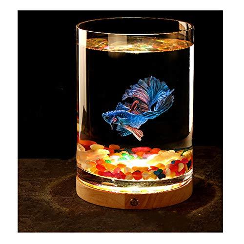 Kleines Aquarium, tropisches Kaltwasser-LED-Licht, mit Muscheln und Glassand