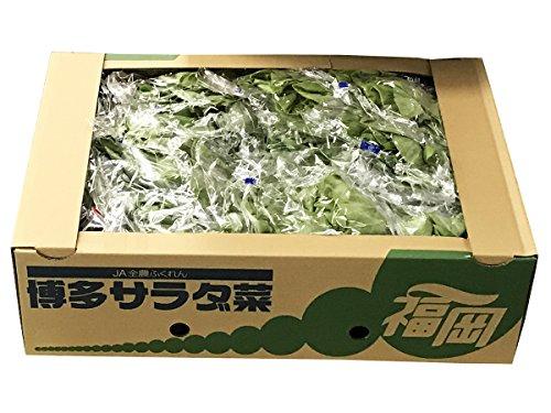福岡県産 サラダ菜 1.4kg(12入り)/箱
