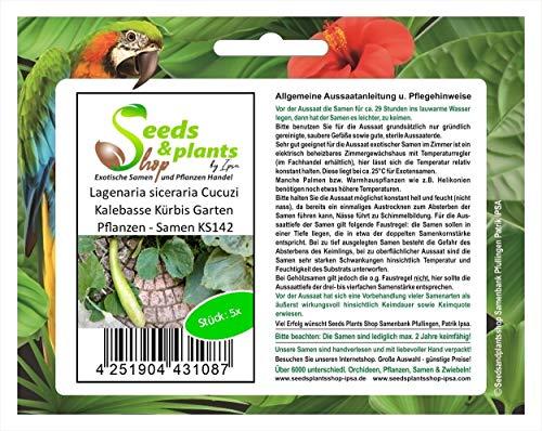 Stk - 5x Lagenaria siceraria Cucuzi Kalebasse Kürbis Garten Pflanzen - Samen KS142 - Seeds Plants Shop Samenbank Pfullingen Patrik Ipsa