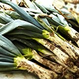 とろ~り甘い 下仁田ねぎの苗2個セット(しもにたネギ)(ねぎ多粒蒔き苗)【野菜苗 10.5cm半硬質ポット実生苗/2個セット】ポット苗なので年中植付け可能!深めのプランターでも楽しめます。長ネギは葉鞘部を土の中で白く育てるため、主に畑での露地栽培が適しています。しかし土寄せの代わりに新聞紙と支柱を利用すればプランターでも十分育てることができます。新鮮野菜苗自社農場より直送!!【※出荷タイミングにより、苗の大きさは大きくなったり小さくなったりします。植物ですので多少の枯れ込みやキズ等がある場合もございますが、あらかじめ、ご了承下さい】