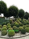 rets 20 ginepro palle potteds purificano l'aria assorbe es nocivi, piante giardino di casa, molto facile da coltivare trasporto libero: verde