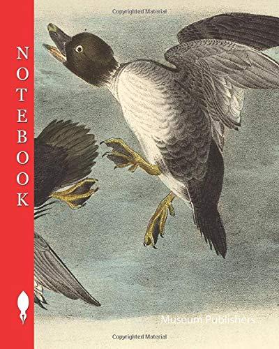 Notebook: Golden Eye Duck, Common Goldeneye, Bucephala clangula, Fuligula clangula, 1856, John James Audubon, The birds of America (Pick up your pen and write, Band 10439)