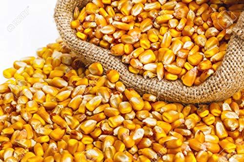 piensos fauna Maiz en Grano Saco de 10kg.