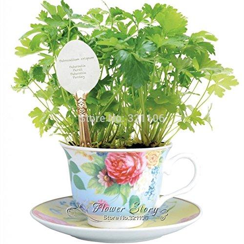 400 Persil Graines de légumes en pot plants de légumes maison jardin bricolage plante bonsaï