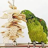 Zhouzl Hogar & Jardín Toy Bite Loro Calamar Sepia Bone Loofah Copo de maíz Hogar & Jardín