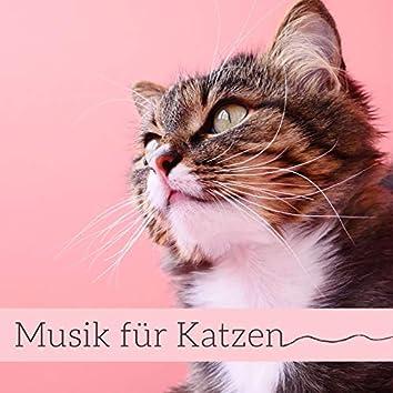 Musik für Katzen: Entspannungsmusik für Ihre Haustiere