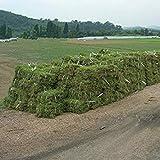 GEOPONICS Weit verbreitet notatum Seeds 1800pcs, Samen Familie Poaceae Bahia Grün Gärtnern, Pensacola Bahia s Seeds