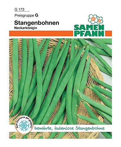 Samen Pfann G173 Stangenbohne Neckarkönigin (Stangenbohnensamen)