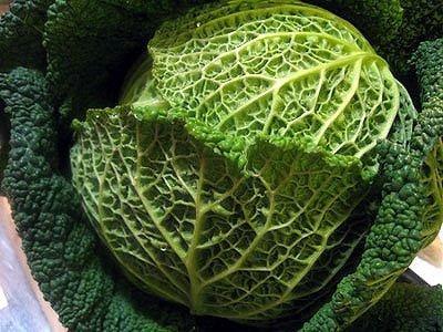 イタリアの野菜通年カーボロ・ヴェルツァ(ちりめんキャベツ)約1Kg 毎週金曜日入荷