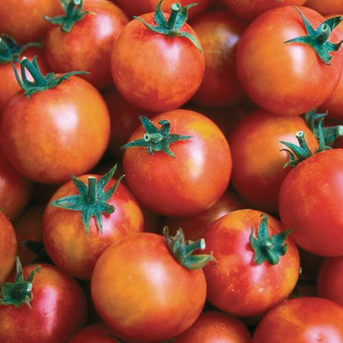 30 ISIS CANDY CHERRY TOMATE SEEDS 2018 (graines de légumes Heirloom non-ogm!)