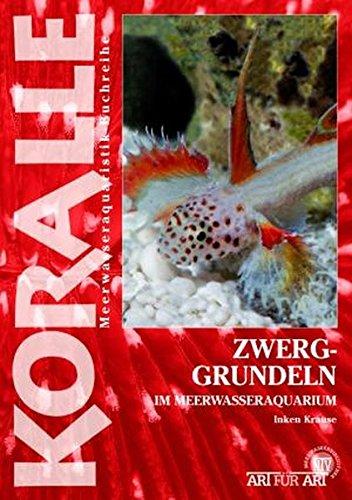Zwerggrundeln: im Meerwasseraquarium (Koralle)