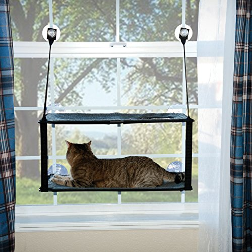 cat window bed Kitty