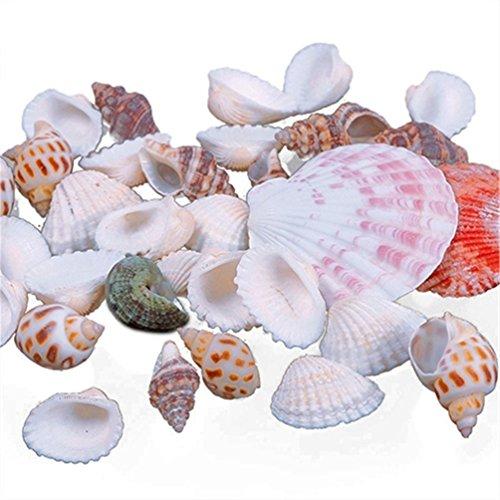 100 g de coquillages de mer pour décoration d'aquarium