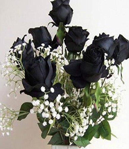 50 Graines Rose Noire - avec bord rouge, couleur rare, jardin de fleurs populaires Graines vivaces Bush ou Bonsai Fleur 5