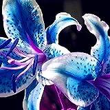 Semillas de flores, 1 bolsa de semillas de lirio estético Fácil de cultivar Mini semillas de flores portátiles para Bouqet para un regalo ideal de flores de jardinería