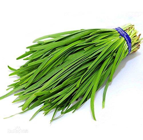 Tasty 400 Ciboulette Seeds Non- Gmo Heirloom jardin potager cour sans problème