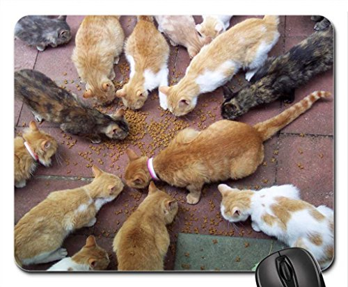 Cats Mouse Pad, souris (Cats Mouse Pad)